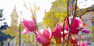 cvetnapijaca2014-324x160 Početna - Moj Bečej