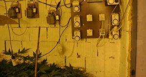 Otkrivena laboratorija za proizvodnju marihuane sa 2.530 sadnica konoplje i kompletnom opremom | Foto: MUP