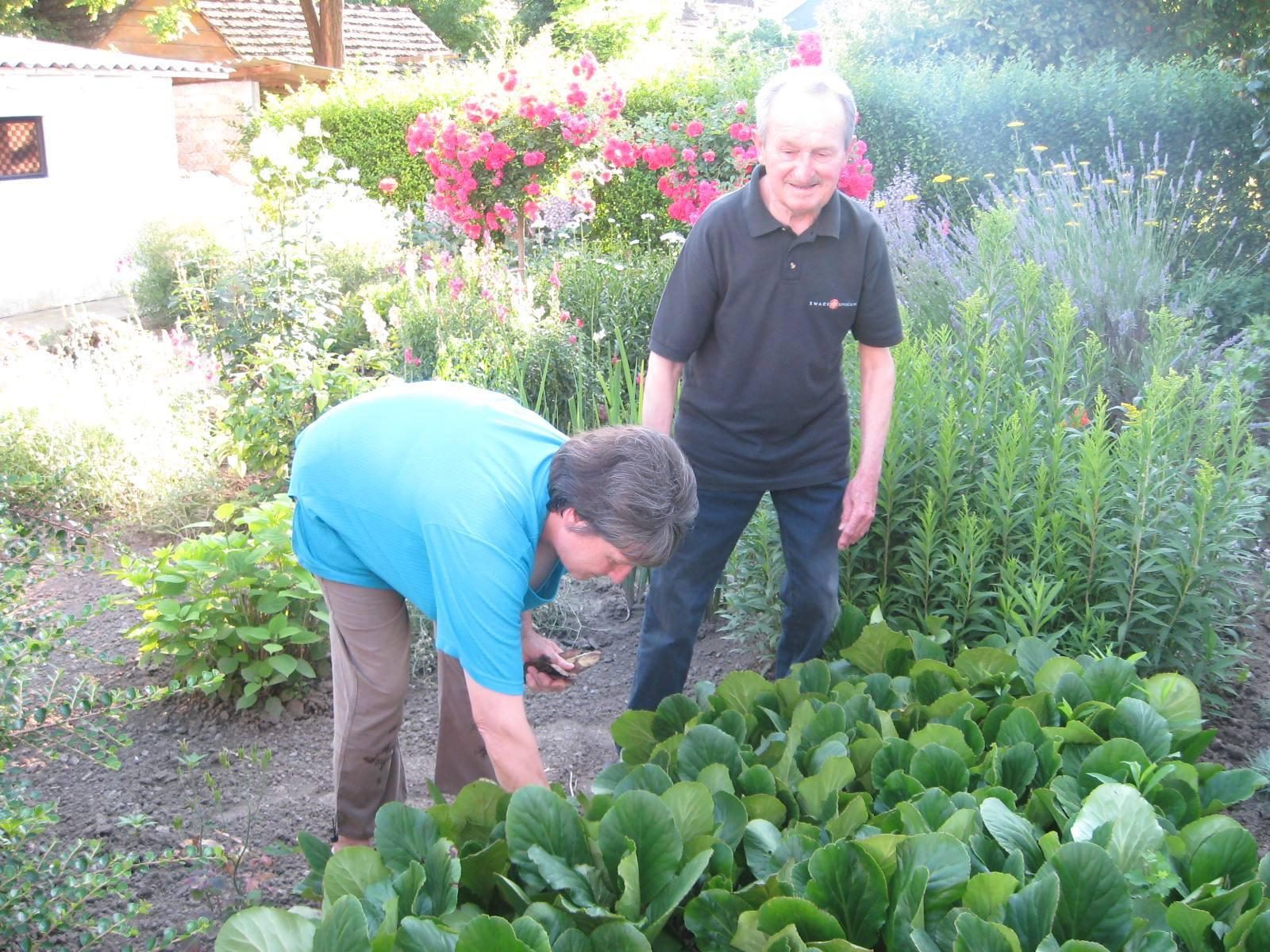 Uvek ima posla u bašti   Foto: Vlastimir Jankov