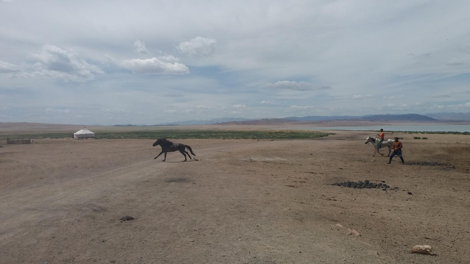 Hvatanje divljih konja po pustinji