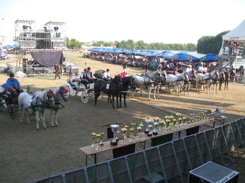 Najbolji dvoprezi 24. revije paradnih konja u Novom Bečeju | Foto: Vlastimir Jankov
