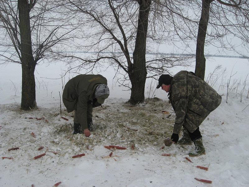 Gde ostane šapurika, divljač je pojela kukuruz,a gde ga nema lopovi su ga odneli | Foto: Vlastimir Jankov