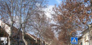 Vekovni šarm bečejskoj Zelenoj ulici umnogome daju platani | Foto: Vlastimir Jankov