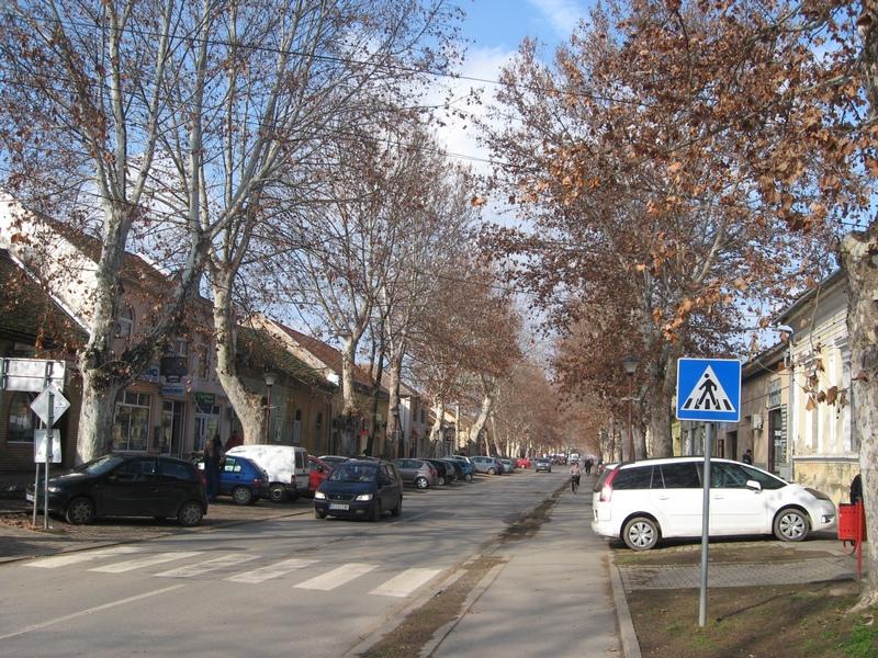 Vekovni šarm bečejskoj Zelenoj ulici umnogome daju platani   Foto: Vlastimir Jankov