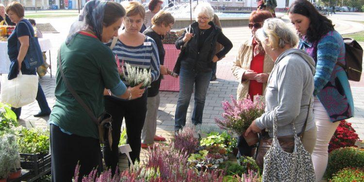 Pored uživanja u gledanju, cveta i prodaja cveća | Foto: Vlastimir Jankov