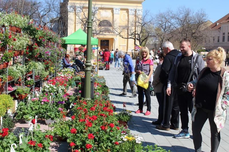 Muškatle uvek privlače pažnju u proleće | Foto: Vlastimir Jankov