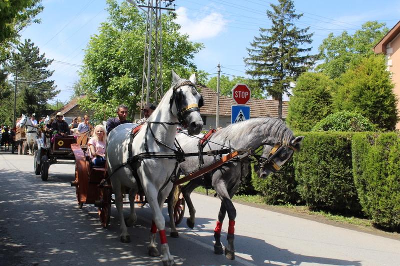 Defile konjskih zaprega picoderskim ulicama privlači posebnu pažnju Bečejaca | Foto: Vlastimir Jankov