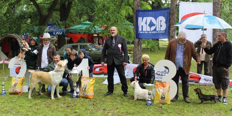 Četiri najlepša psa bečejske izložbe   Foto: Vlastimir Jankov