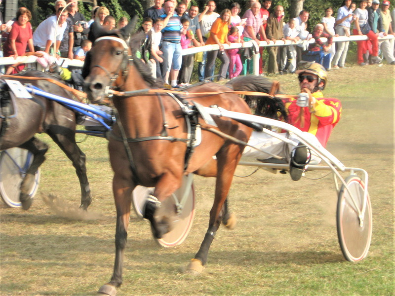 Kasački sport je posebno atraktivan ljubiteljima konjarstva | Foto: Vlastimir Jankov