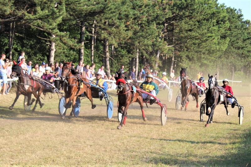 Iza dobrih konja diže se prašina   Foto: Vlastimir Jankov