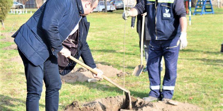 Predsednik opštine Bečej Dragan Tošić na sadnji drveća u Bačkom Gradištu