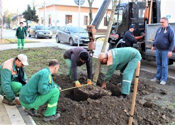 Sadnja stabla magnolije u Ulici Miloša Crnjanskog