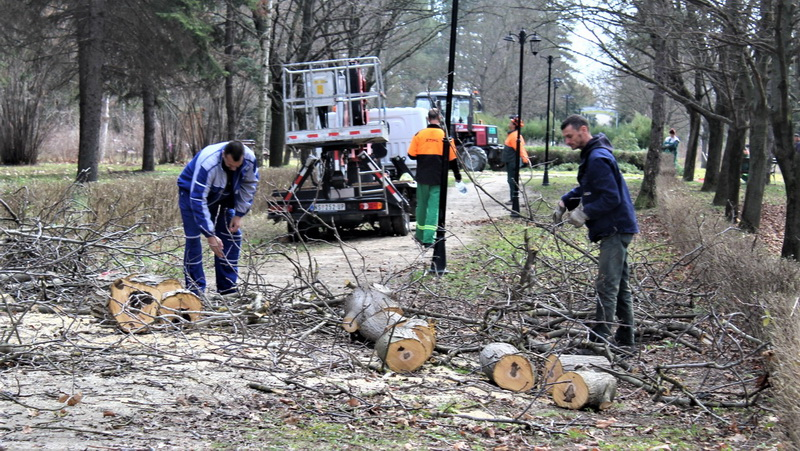Orezivanja drveća uz javnu rasvetu