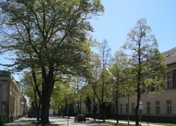 Bečej, Zelena ulica