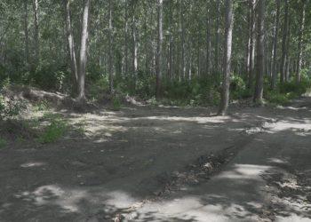 Šuma kraj Tise, avgust 2020. godine
