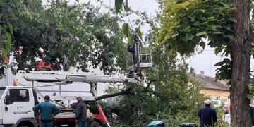 "Radnici ""Komunalca"" uklanjaju drvo | Foto: Facebook/Bella Imre Gajdos"