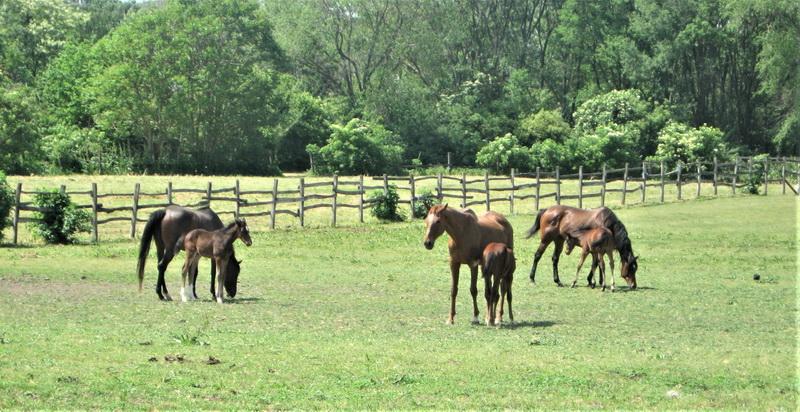 U Ergeli PIK Bečej sada se lako mogu izbrojati konji
